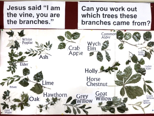 vine-branches-closera-500a