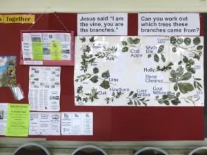 vine-branchesb-500