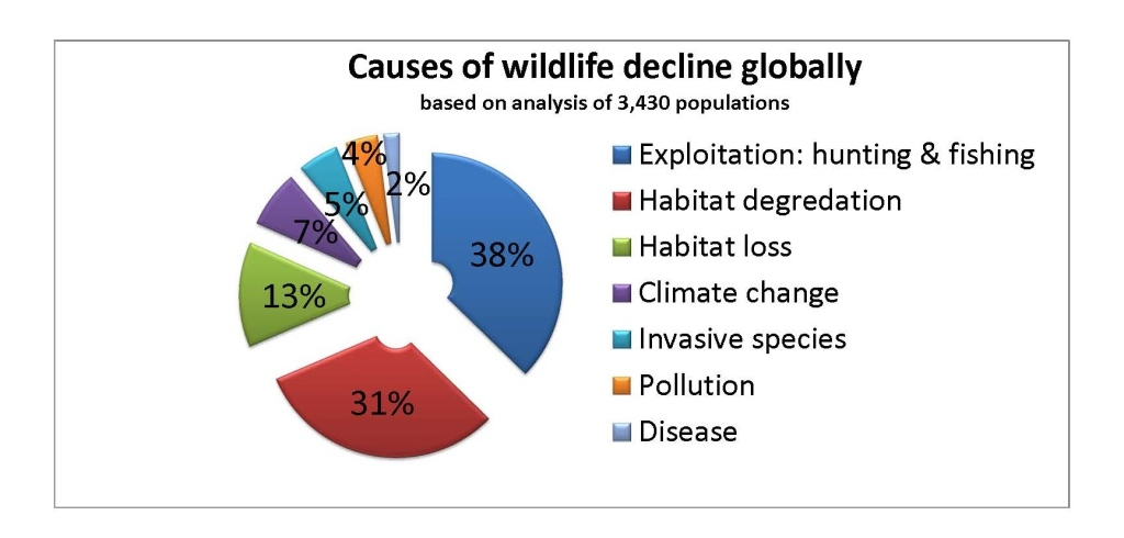 wildlife-decline