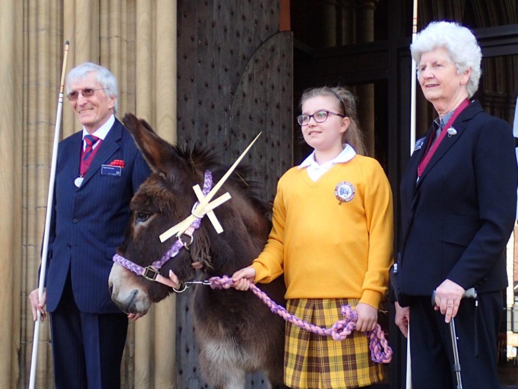 Lily the Donkey at Ripon Palm Sunday Procession